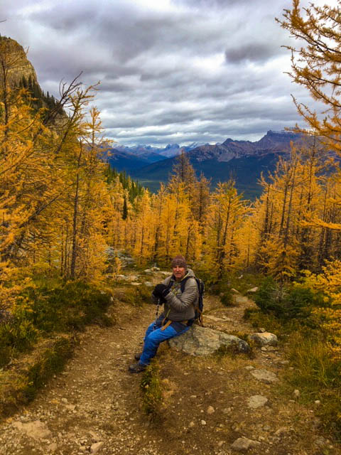 The Golden Larches at Lake Louise