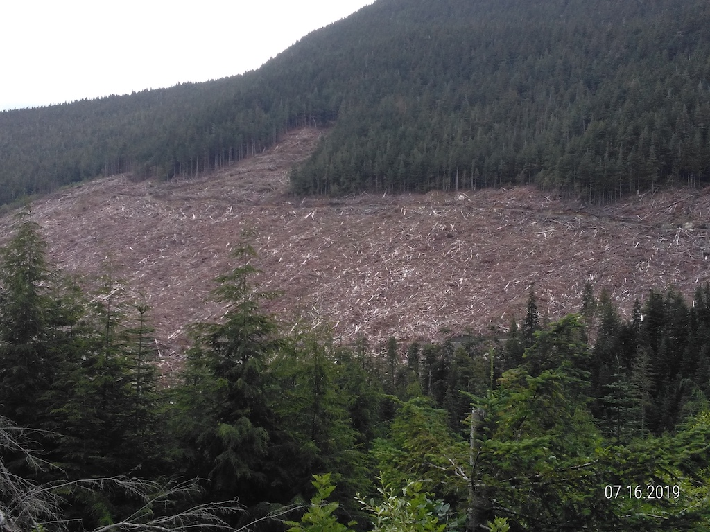 Fabrications and Reality on the State of BC's Forests and Climate Change